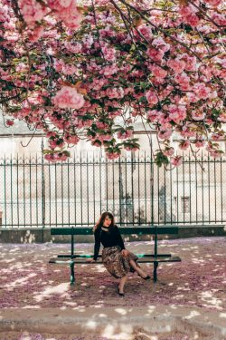 photoshoot Notre Dame de paris cherry blossoms