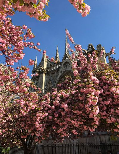 The beautiful spires of the Notre Dame Cathedral in Springtime Paris